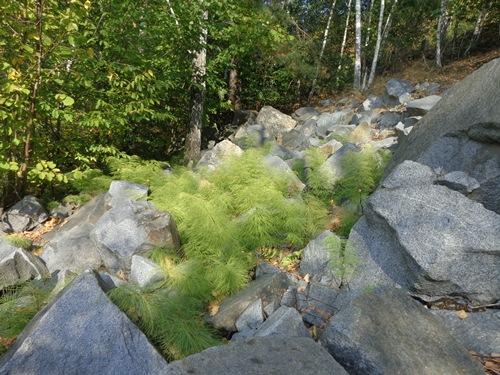 Каменистый лес фото 5